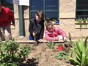 students plant flowers in garden
